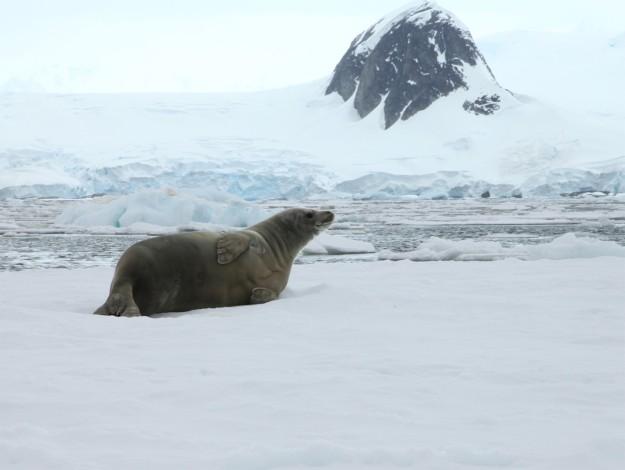 seal2-large
